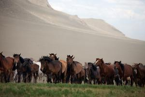A Herd of Horses on the Mongolian Steppe by Ben Horton