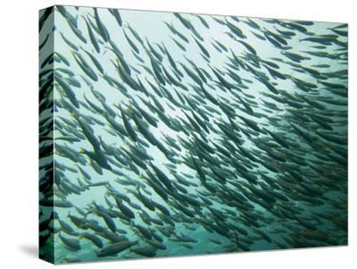 A School of Fish in the Waters Off Ko Pi Pi