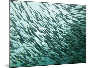 A School of Fish in the Waters Off Ko Pi Pi by Ben Horton