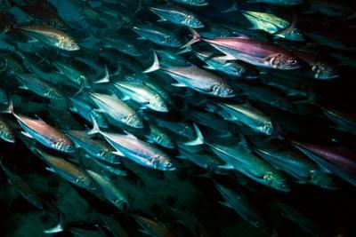 A School of Mackerel by Ben Horton