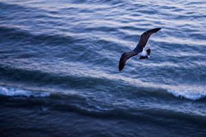 Baja California, Mexico: A Seagull from Above by Ben Horton