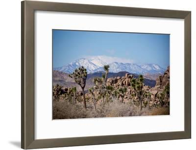 Joshua Trees and Snow Covered Mountains in Southern California