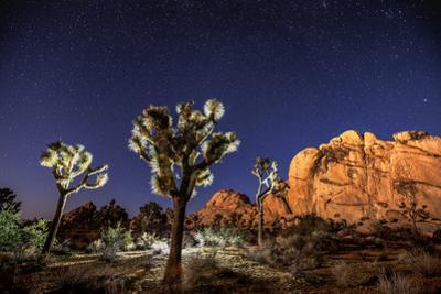 Joshua Trees Beneath the Stars
