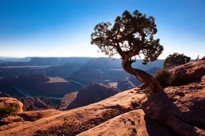 Moab, Dead Horse Point, Utah: A Lone Juniper Tree Overlooking the Colorado River, Dead Horse Point by Ben Horton