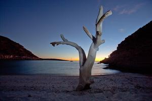 Oddly Placed Driftwood and an Anchored Sailboat in a Secluded Cove by Ben Horton