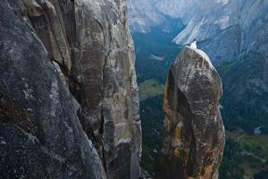 Posing on the Lost Arrow Spire Above Yosemite Village on Her Wedding Day by Ben Horton
