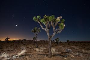 Stars over Joshua Trees in the Desert by Ben Horton