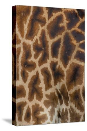 Tanzania, Africa: Patterns from the Hide of a Giraffe