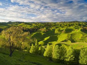 Farmland Near Taihape, North Island, New Zealand, Pacific by Ben Pipe