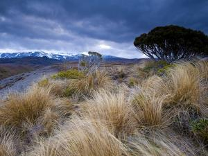Tongariro National Park, UNESCO World Heritage Site, North Island, New Zealand, Pacific by Ben Pipe