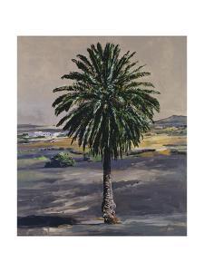 Palm, 2001 by Ben Schonzeit
