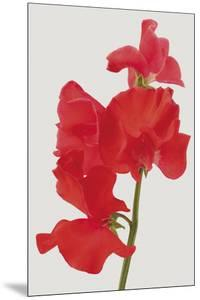 Vivid Bloom - Grow by Ben Wood