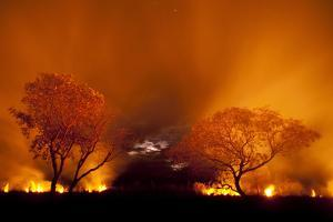 Grass Fire at Night in Pantanal, Brazil by Bence Mate
