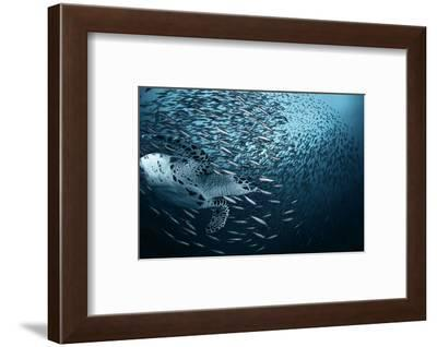 Bend-Andrey Narchuk-Framed Photographic Print