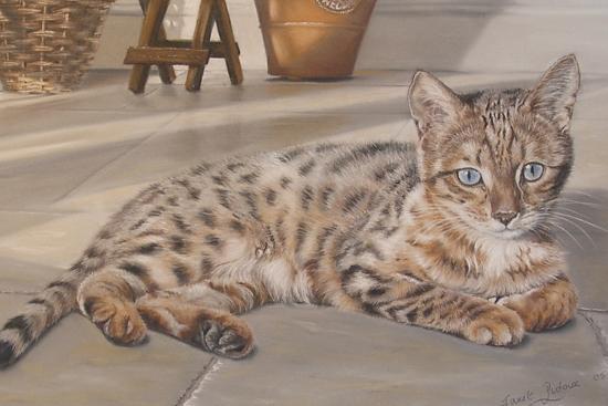 Bengal Kitten-Janet Pidoux-Giclee Print