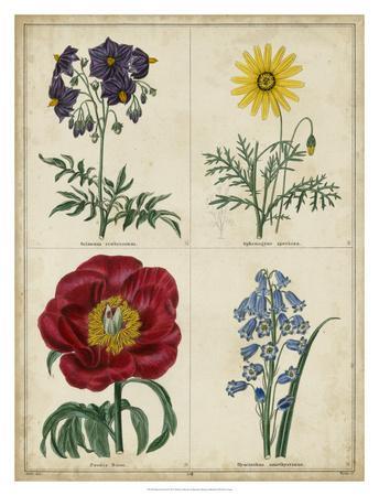 Botanical Grid I