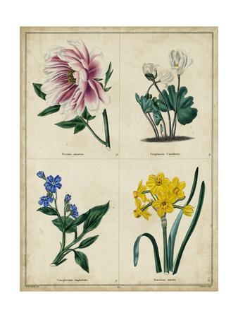 Botanical Grid II