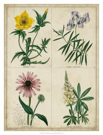 Botanical Grid IV