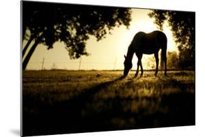 A Horse Nibbles Grass at Sunrise, Lafayette Colorado by Bennett Barthelemy