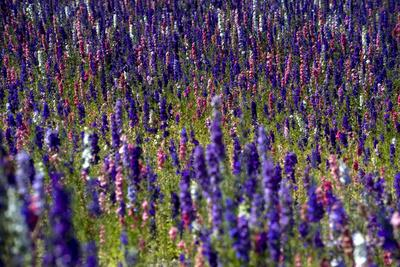 Flowers at a Farm in the Willamette Valley of Oregon