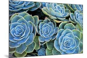 Succulents by Bennett Barthelemy