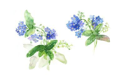 Bent Stems with Clusters of Forget-Me-Nots