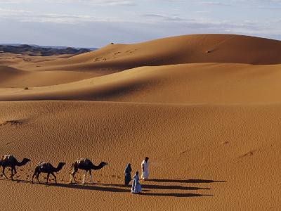 Berber Tribesmen Lead their Camels Through the Sand Dunes of the Erg Chegaga, in the Sahara Region -Mark Hannaford-Photographic Print