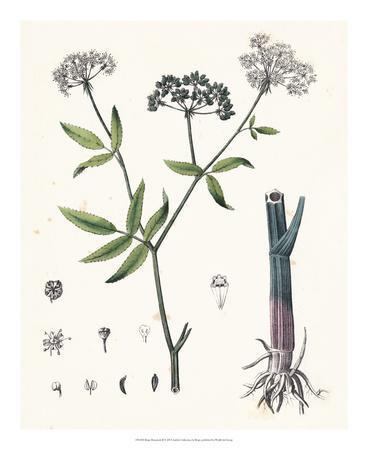 Berge Botanicals II
