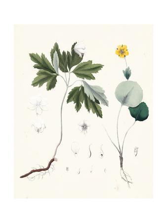 Berge Botanicals III