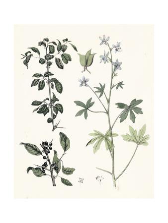 Berge Botanicals IV