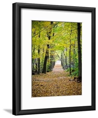 Berkshires Near Appalachian Trail Photo Art Print Poster