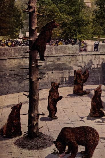 Bern Schweiz, Zoo, Blick in Den B?rengraben, Braunb?ren, Besucher--Giclee Print