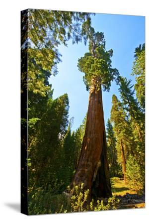 California, Sequoia, Kings Canyon National Park, General Grant Tree