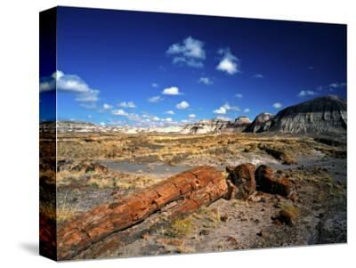 Long Petrified Log at Blue Mesa, Petrified Forest National Park, Arizona, USA