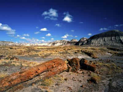 Long Petrified Log at Blue Mesa, Petrified Forest National Park, Arizona, USA by Bernard Friel