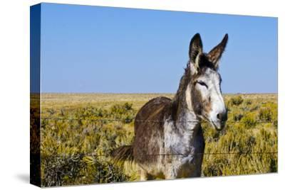 New Mexico, Bisti/De-Na-Zin Wilderness, Donkey
