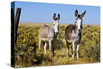 New Mexico, Bisti De-Na-Zin Wilderness, Two Donkeys