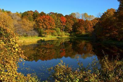 USA, Minnesota, Sunfish Lake, Fall Color Reflected in Pond