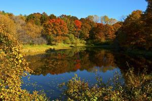USA, Minnesota, Sunfish Lake, Fall Color Reflected in Pond by Bernard Friel