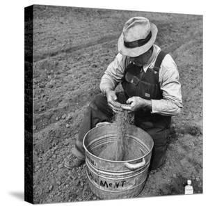Farmer Straining Grain Through His Fingers by Bernard Hoffman