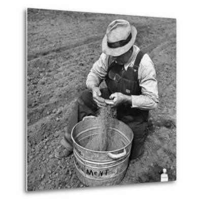 Farmer Straining Grain Through His Fingers