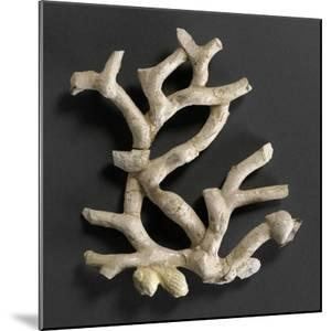 Plaque ajourée : branche de corail blanc et coquillages jaunes by Bernard Palissy