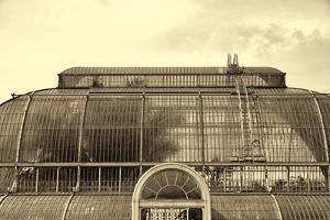 The Palm House by Bernard Webb