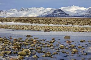 Iceland, Iceland, the South, Moss Padding, Skaftafell, Skaftafell National Park by Bernd Rommelt