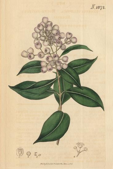 Berries and Leaves Vintage Botanical Print-Piddix-Art Print