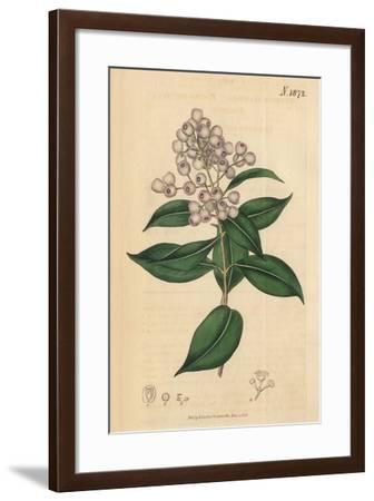 Berries and Leaves Vintage Botanical Print-Piddix-Framed Art Print