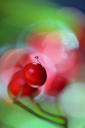 https://imgc.artprintimages.com/img/print/berries-drop_u-l-q11d9xu0.jpg?p=0