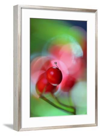 Berries Drop-Heidi Westum-Framed Photographic Print