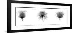 X-Ray Rose Triptych by Bert Meyers