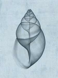 Achatina Shell (light blue) by Bert Myers